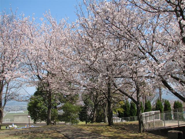 「柿大将」 百年公園桜まつり